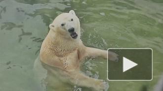 Петербуржцев растрогало кормление зверей в зоопарке