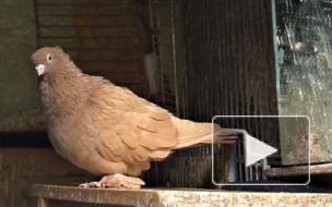 Орнитолог рассказал, нужно ли кормить голубей в Петербурге