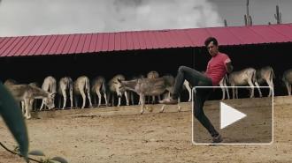 """Группа """"Ногу Свело!"""" выпустила клипа на песню """"Селекция"""""""