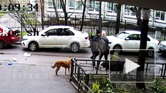 Драка собачников на Выборгском шоссе попала на видео