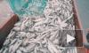 Рыбаки Аляски подсчитали потери от введенного Россией продэмбарго