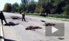Новости Украины: в Днепропетровской области найдено четыре рефрижератора с трупами солдат