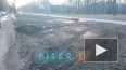 Видео: петербуржцы пожаловались на бессмысленную вырубку...