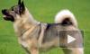 Возбуждено уголовное дело против москвича, который выбросил свою собаку из окна пятого этажа