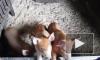 Россельхознадзор ограничивает ввоз в Россию свинины из Сербии из-за чумы