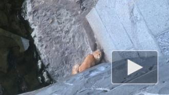Петербуржцы спасли большого рыжего кота с островка на Обводном канале