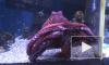 Московский зоопарк приобрел сородича осьминога Пауля