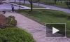 На полицейского напал гусь в американском городе Кларксвилл