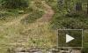Жуткие новости из Тосно: около озера в машине нашли труп иностранки