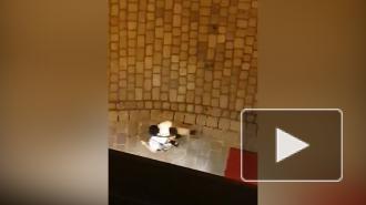 Появилось видео нападения террористов в Вене