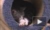 В Петербурге отмечают Всемирный день петербургских кошек и котов