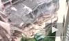 Десятки человек оказались под завалами рухнувшей фабрики в Шанхае