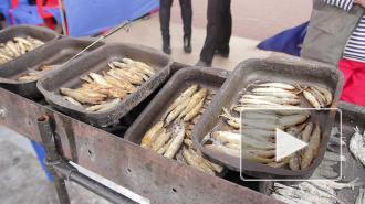 Петербуржцы спасали популяцию лосося и метали икру