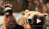 В Белгородской области цирковой медведь напал на женщину с ребенком