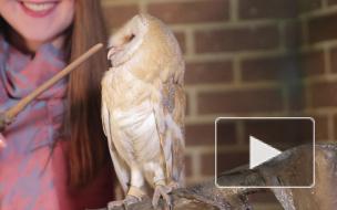"""Сова из """"Гарри Поттера"""" встречала гостей ярмарки животных танцами"""
