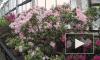 В Ботаническом саду в первые дни весны расцвели тысячи тюльпанов