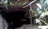 Трогательное видео из Красноярска: Спасение собаки из колодца попало на видео