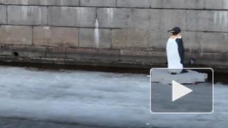 В Петербурге на льду высадился пингвин, он не ест и не пьет, пугает народ, а люди кидают ему монетки
