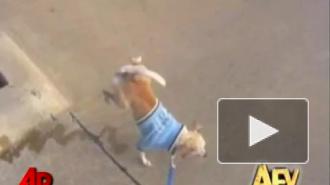Весёлые собаки :)