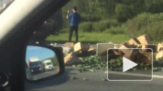 Московское шоссе засыпало огурцами
