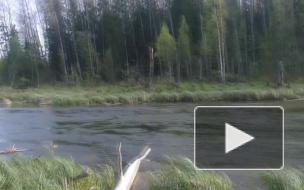 Есть ли в реке форель?