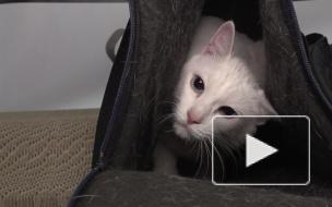 Секреты кота Ахилла: о внутренних голосах и свободном от предсказаний времени