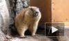 В Ленинградском зоопарке проснулись сурки Ижорик и Августина
