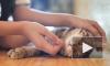 Кошкам пережить стресс помогает кошачья музыка