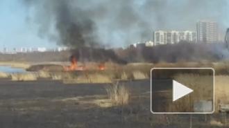 """Видео: в Приморском районе горит камыш на фоне """"Лахта Центра"""""""