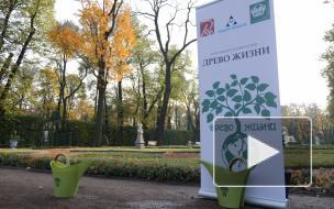 """В Летнем саду посадили молодую липу в рамках проекта """"Древо жизни"""""""