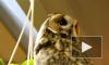 Отобранные у фотографов около Исаакиевского собора совы теряли перья из-за недоедания