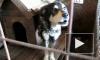 Одиннадцать собак и хозяйка героически выдерживали осаду приставов