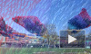 Петербуржцы сняли на видео огромную Жар-птицу на острове Новая Голландия