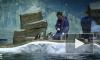 Видео: в Приморский океанариум привезли восемь пингвинов Гумбольдта