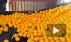 Врач-диетолог рассказала о пользе и вреде мандаринов