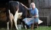 """""""Уходящая натура"""": на съемках 5, 6 серий корова отхлестала Марию Шукшину хвостом по лицу"""