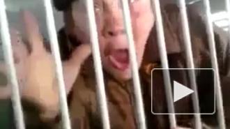 Полиция Петербурга задержала 63-летнюю хулиганку