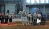 """В Ленэкспо проходит выставка """"Иппосфера"""", на которой представлены десятки пород, в том числе очаровательные мини-лошадки и пони"""