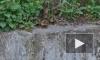 Очевидцы сняли недавно родившихся утят в Малоохтинском пруду