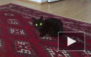 Котёнок издаёт странные звук