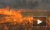 Минприроды поручило Рослесхозу пересмотреть границы зон контроля лесных пожаров