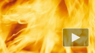 Пожар во Всеволожском районе: трое несовершеннолетних сгорели заживо, празднуя день рождения, именинник спасся