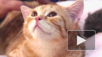 Кошки элитных пород посетили город