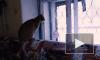 Жители Петроградского района опасаются обрушения дома