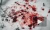 Под Ярославлем 17-летний парень нанес 30 ударов ножом младшему брату