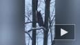 На проспекте Пятилеток петербуржцы заметили сову