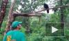 Видео: ворона из Приморского Сафари-парка заговорила по-английски ради еды