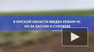 В Омской области введен режим ЧС из-за засухи и суховеев