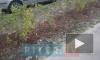 Активисты посадили во дворе своего дома 70 зеленых кустов