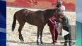 Госдеп снял лошадь Кадырова со скачек в США из-за ...